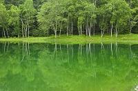 長野県 蓼科高原 白樺映る湖面