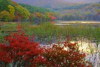 福島県 観音沼の紅葉