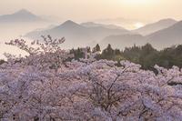 愛媛県 春の開山公園