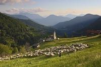 イタリア パルー・デル・フェルシーナ 牧羊と羊飼い