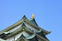 愛知県 名古屋城 大天守閣の金の鯱鉾と青空
