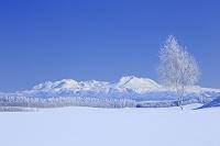 北海道 霧氷と旭岳