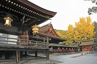 京都府 北野天満宮とイチョウの紅葉