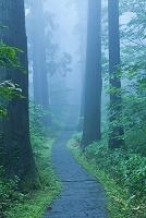 山形県 羽黒山杉並木の参道