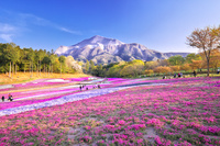 埼玉県 羊山公園の芝桜の丘