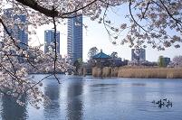 東京都 上野公園不忍池