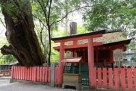 奈良県 水谷神社とイブキ