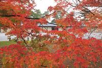 京都府 京都御苑の紅葉