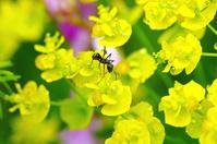 水滴のある花の蟻