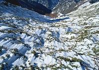 長野県 燕岳 冬のハイマツ