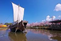 山形県 日和山公園・帆船とサクラ