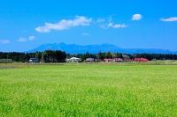 栃木県 田園 田起こし前の水田
