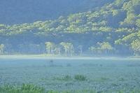群馬県 中田代から望む朝日射す白樺林