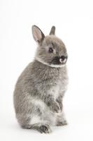 2本足で立っているウサギ