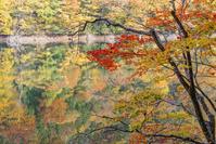青森県 紅葉と鶏頭場の池