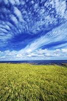 石川県 稲と仁江海岸と雲