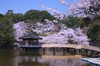 奈良県 浮見堂の桜