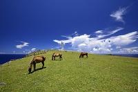沖縄県 八重山列島 与那国島 ヨナグニ馬
