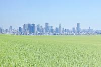 草原と高層ビル群
