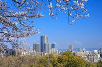 大阪府 桜咲く大阪城公園より大阪ビジネスパーク