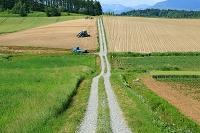 北海道 富良野市 農道と畑