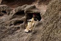 岩穴で過ごす修道士/聖救世主教会