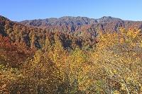 青森県 紅葉のブナ林と白神山地