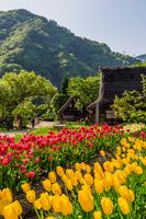 富山県 春の菅沼合掌集落