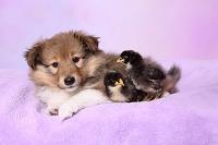 犬とヒヨコ