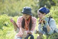 畑で人参を収穫する日本人女性