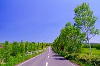 北海道 草原の丘の木