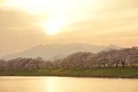 宮城県 夕日に染まる一目千本桜と蔵王連峰