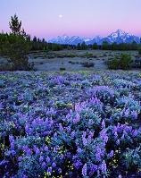 アメリカ合衆国 満月とグランドティトン国立公園