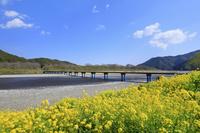 高知県 佐田の沈下橋と菜の花