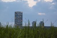 東京都 有明の高層マンションと緑地