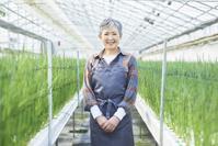 ハウスで働くシニアの日本人女性