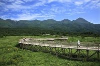 北海道 知床連峰と知床五湖高架喪木道