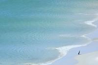ジプシー入り江 ペンギン