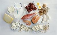高タンパク質の食材の集合