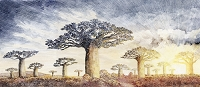 バオバブの風景