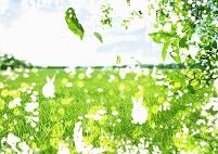 ウサギのいる草原のイメージ