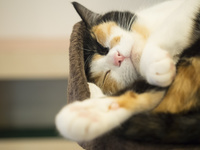 愛知の家猫
