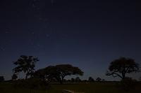 ジンバブエ ワンゲ国立公園 夜空