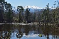 長野県 乗鞍高原 どじょう池より水芭蕉と乗鞍岳の映り込み