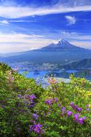 山梨県 ミツバツツジ咲く新道峠より富士山