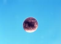 ヒキガエルの発生 桑実胚