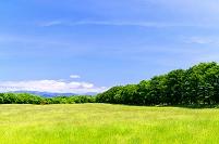 北海道 なだらかな初夏の草原