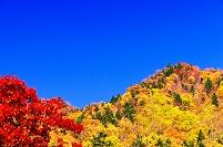 北海道 深紅の楓と紅葉した山