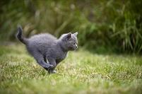 芝生の上を走る猫