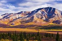 アメリカ合衆国 アラスカ デナリ国立公園 紅葉